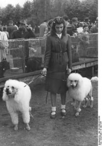 Pudel auf Hundeausstellung 1947