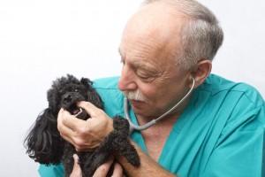 Gründliche Untersuchung beim Tierarzt