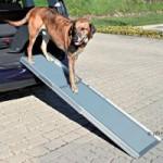 Für größere ältere Hunde ist eine Hunderampe sinnvoll.