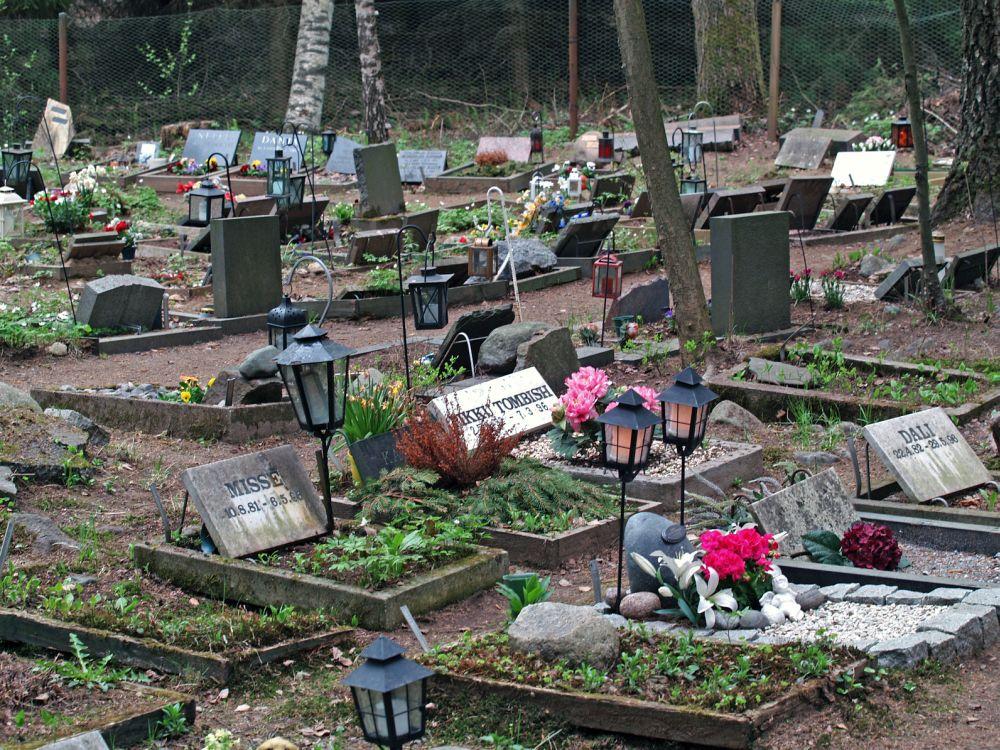 Pudel auf dem Tierfriedhof begraben