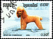 CAMBODIA - CIRCA 1990: postage stamp, printed in Cambodia, shows a Poodle dog