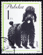 Postage stamp Poland 1963 Poodle, Dog